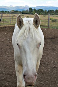 Teton Mountain View Albino Horse