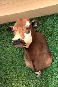August 3, 2012 - Head of Bessie