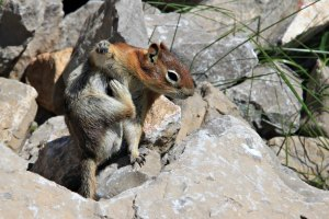 August 2, 2013 - Itchy Chipmunk (click me)