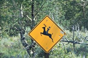 July 22, 2013 - Deer Riding Crossing