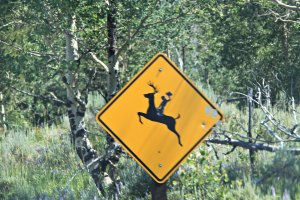 July 22, 2013 - Deer Riding Crossing