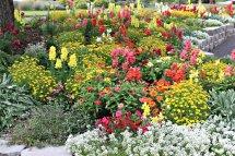 Deschutes Flowers
