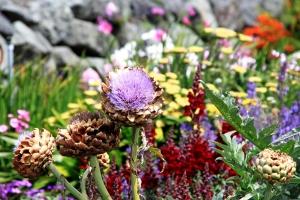 August 13, 2012 - Yard Flowers Cannon Beach