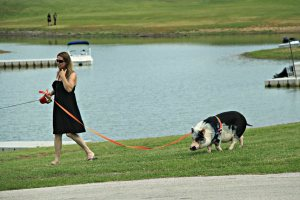 June 19, 2013 - Just a Girl Walking Her Pig