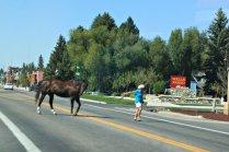 Driggs Horse Crossing