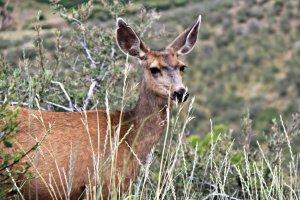 July 1, 2013 - Yes, Deer