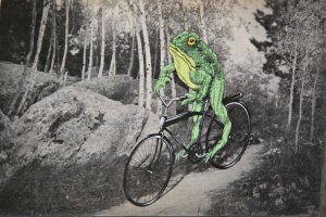 July 5, 2013 - Mountain Toad