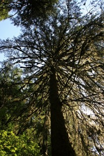 Munson Creek Tree