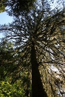 Munson Creek Tree