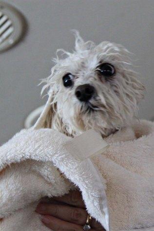Peggy Gets a Bath