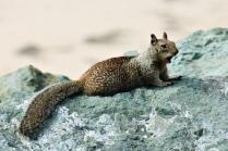 Bored Squirrel