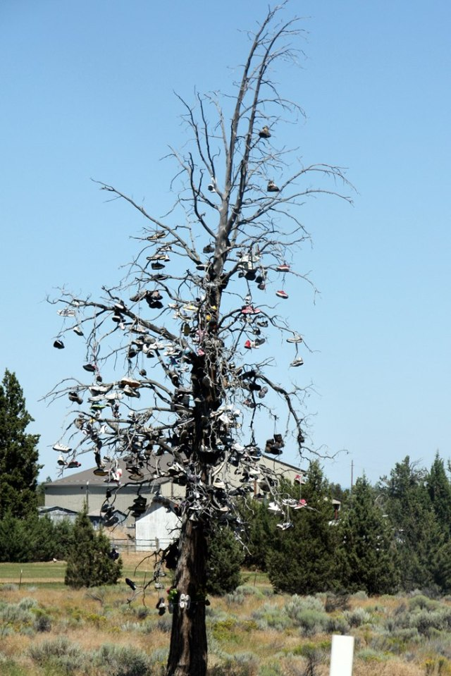 July 26, 2014 - Redmond Shoe Tree