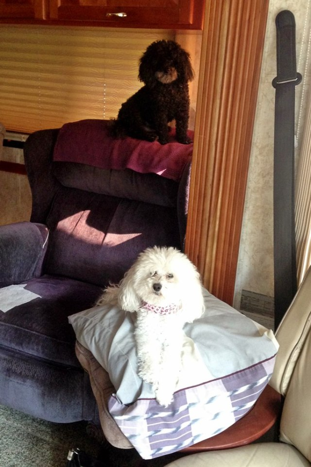 August 1, 2014 - Poodle Stack
